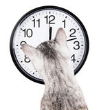 Chat d'horloge photographie stock