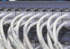Chat 5 d'UTP - commutateur de connecteur de câbles RJ45 images libres de droits