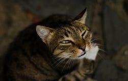 Chat dans Cinque Terre- Italie Photo libre de droits
