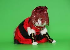 Chat dans de beaux vêtements. Photo stock