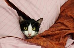 Chat dans des oreillers Image stock