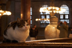 Chat dans Hagia Sophia, Istanbul Photographie stock