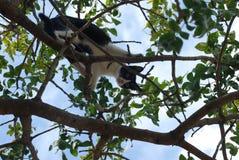 Chat dans l'arbre Photographie stock
