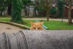 Chat dans l'embuscade image stock