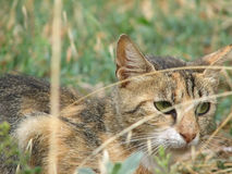 Chat dans l'herbe Photo stock