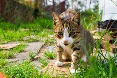 Chat dans l'herbe image libre de droits