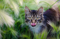 Chat dans l'herbe Photo stock