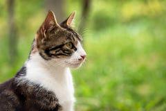 Chat dans l'herbe verte images libres de droits