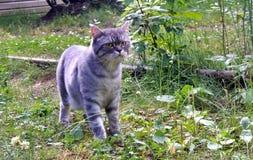 Chat dans l'herbe verte en été Photos stock