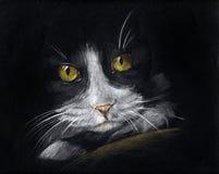 Chat dans l'obscurité Photos stock