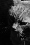 Chat dans l'ombre et la lumière image libre de droits