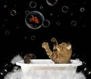 Chat dans la baignoire 1 photo libre de droits