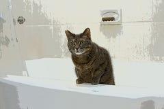 Chat dans la baignoire Image libre de droits