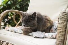 Chat dans la chaise Photos stock