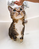 Chat dans la douche Photos stock