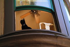 Chat dans la fenêtre photo stock