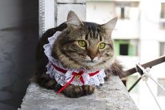 Chat dans la fenêtre Photos libres de droits