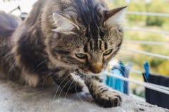 Chat dans la fenêtre Photos stock