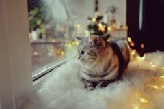 Chat dans la fenêtre d'hiver Images libres de droits