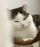 Chat dans la fin confortable de lit d'animal familier vers le haut de la photo photo libre de droits