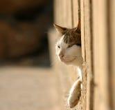 Chat dans la frontière de sécurité Photographie stock libre de droits