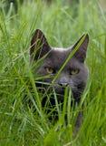 Chat dans la longue herbe Images stock