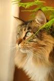 Chat dans la maison 3 Photos stock