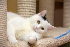 Chat dans la maison de chat avec un grattoir image libre de droits