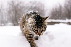 Chat dans la neige images stock