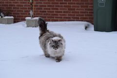 Chat dans la neige Photo stock