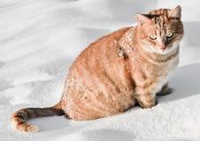 Chat dans la neige Image libre de droits