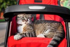 Chat dans la poussette Photos stock