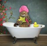 Chat dans la salle de bains photographie stock libre de droits