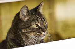 Chat dans la trappe Photo stock