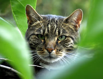 Chat dans la verdure Photos stock