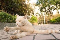 Chat dans la ville Photographie stock libre de droits