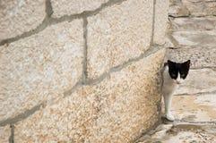 Chat dans la ville historique Images stock
