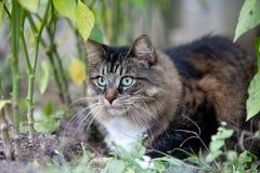 Chat dans le bois Images stock