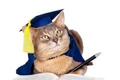 Chat dans le capuchon et la robe de graduation Image libre de droits