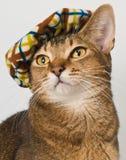 Chat dans le chapeau dans le studio Image libre de droits