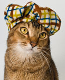 Chat dans le chapeau dans le studio Photos libres de droits