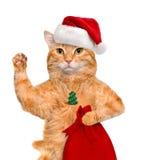 Chat dans le chapeau rouge de Noël Photographie stock