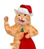 Chat dans le chapeau rouge de Noël Image libre de droits