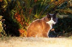 Chat dans le coucher du soleil Photographie stock libre de droits