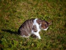 Chat dans le jardin Images libres de droits