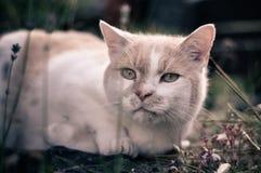 Chat dans le jardin Photos stock
