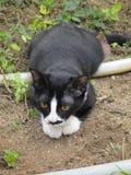 Chat dans le jardin Image stock