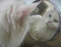 Chat dans le miroir Photo stock