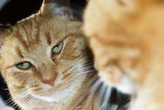 Chat dans le miroir Image libre de droits