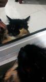 Chat dans le miroir images stock